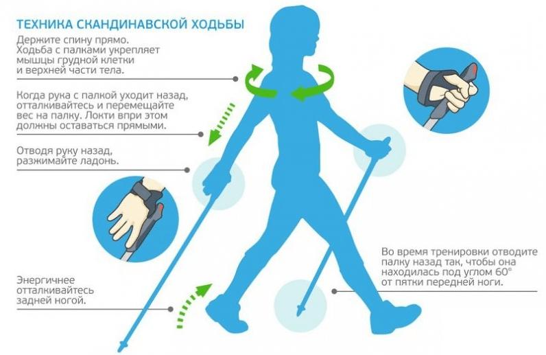 Правильная техника скандинавской ходьбы